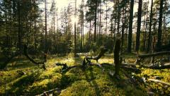 Right to left slider dolly move along a green forest floor Stock Footage