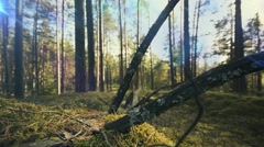 Left to right slider dolly move along a green forest - stock footage