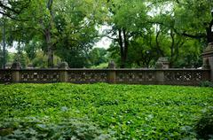 Green foliage and railing in central park Stock Photos