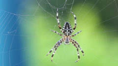Stock Video Footage of Spider running away
