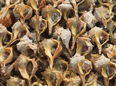 Fresh clam close-up in an open-air market - stock photo