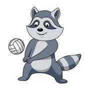 Cartoon raccoon with volleyball ball Piirros