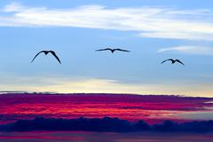 Birds Silhouette Flying Stock Photos