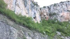 Griffon Vulture (Gyps Fulvus) Stock Footage