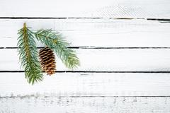 Cone and conifer Stock Photos