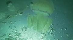 Huge jellyfish floating in the depths illuminated by the sun.Oxygen bubbles Stock Footage