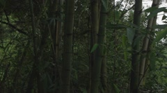 Pan - Chinese bamboo Stock Footage