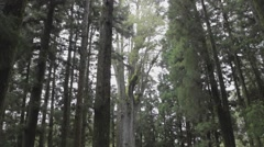 Tilt of the sacred tree Stock Footage