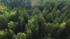 Aerial drone shot over the north european forest Stock Footage