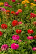 Multi-colored flowers in lawn during summer. Stock Photos