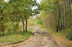 Forestry road in autumn scenery. - stock photo