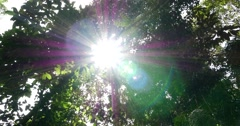 Sunlight Rays Through Trees in Amazon Rainforest, South America Stock Footage