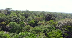 Aerial view of Amazon forest, Brazil Stock Footage
