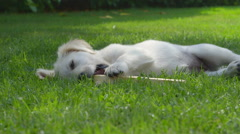 Cute Happy Dog Playing in the Garden Stock Footage