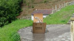 Box with Fragile, Handle with care on side unfurls to release Doves Stock Footage