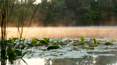 Morning  mist over lilies Stock Footage