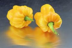 Yellow hot pepper, habanero (Capsicum chinense) - stock photo