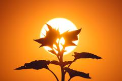The plant and the bright sun background it - stock photo