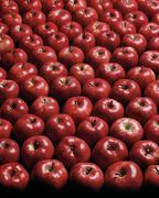 Rows of fresh red apples - stock photo