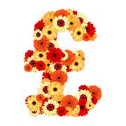 Pound sign of gerber flower isolated on white background - stock photo