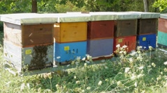 Colorful wooden hives and swarm of bees, beehives close up, honey production, 4k Stock Footage