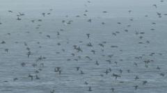 ShearwaterShearwater Seabirds Flying In the Fog Stock Footage