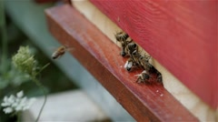 Bees swarm entering and leaving from hive,close up,honey production,slow motion. Stock Footage