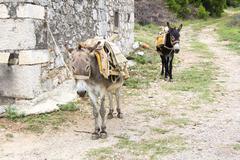 Two donkeys - stock photo