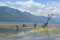 Algae on Lake Atitilan Guatemala Stock Photos