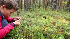 Little boy collecting and eating ripe blueberries from bush in forest. Karelia Stock Footage