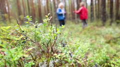 Close up view of blueberries bush and mother with daughter walking in forest. Ka Stock Footage
