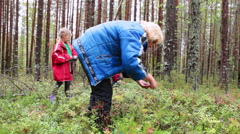 Woman collecting berries together with her children in forest. Karelia, Russia Stock Footage