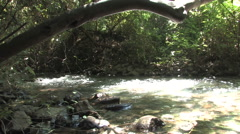 Jordan River in ISRAEL Stock Footage