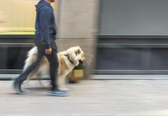 Man walking dog Stock Photos