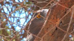 Hai Bar National Biblical Wildlife Reserve Stock Footage