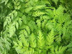 Thickets of pinnate leaves Stock Photos