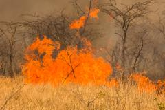 Bushfire disaster - stock photo