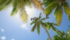 A Palm At The Beach Stock Footage