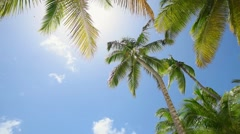 A Palm At The Beach, sky, clouds, sun Stock Footage