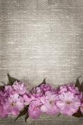 Cherry blossoms on linen background Stock Photos