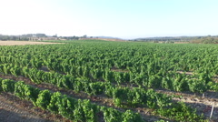 Aerial from a wine field in Portugal Stock Footage