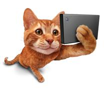 Selfie Cat Stock Illustration