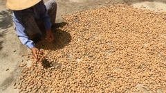 Woman farmer sorting and drying peanuts in Asia Stock Footage
