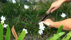women nurtured flower garden - stock footage