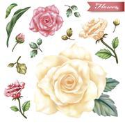 Graceful exquisite roses Stock Illustration