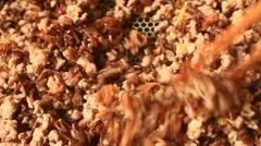 Sauteed pork with mushrooms Stock Footage