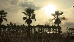 Beautiful tropical beach sunset with palm trees silhouette. Steadycam movemen Stock Footage