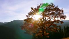 Bright Sun and Golden Foliage Stock Footage