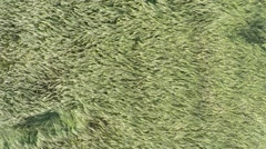 Summer field aerial view Stock Footage