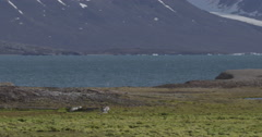 Scenic Arctic Coast in Svalbard with Pond with Pan Stock Footage